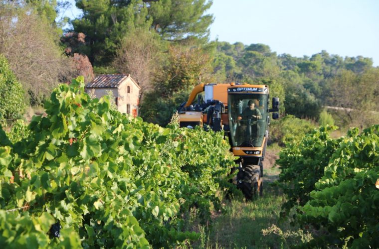 Provence rosé grape harvest 2018 in Cotignac