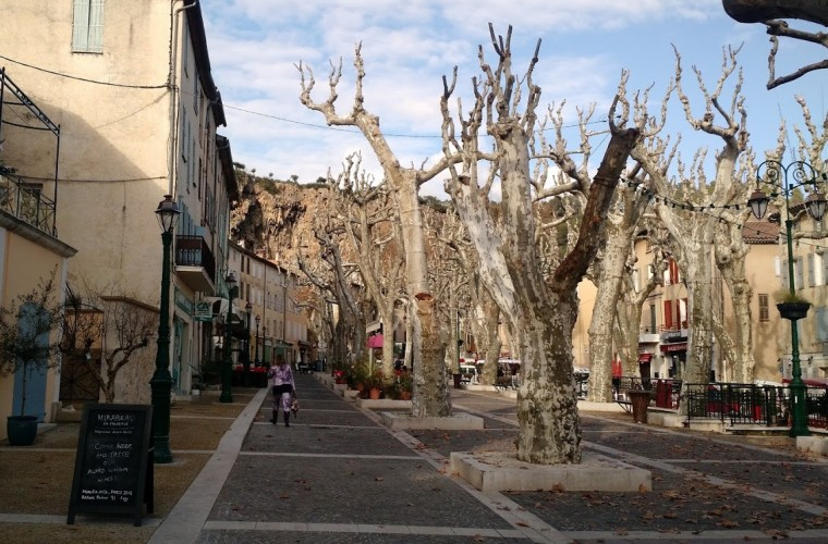 Under The Platanes French Plane Trees Mirabeau