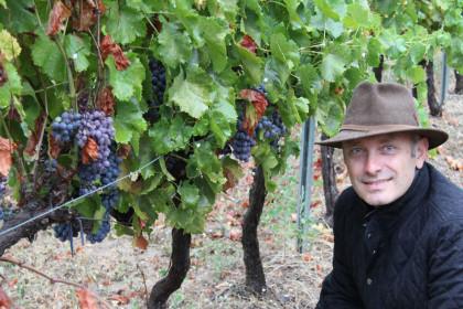 Mirabeau Wine grape harvest Stephen Cronk