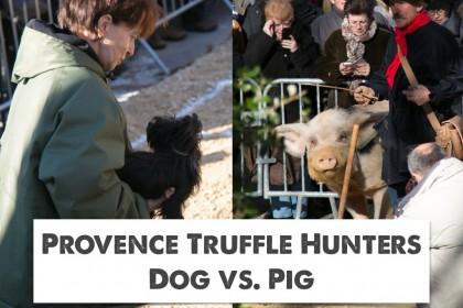 Provence Truffle Hunters: Pig vs Dog