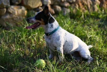 oscar-the-dog-mirabeau-wine