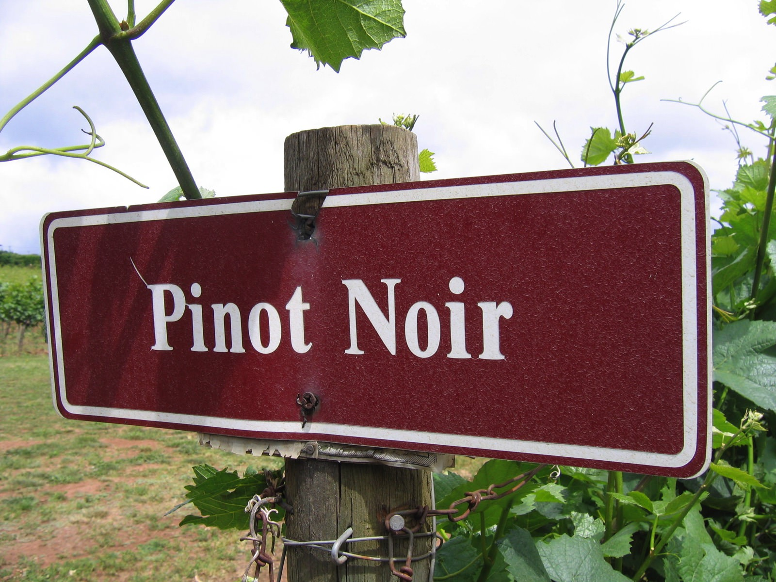 Pinot noir and the new world a burgundian 39 s perspective for Best pinot noir in the world