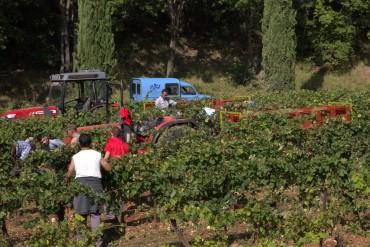 richaume harvest