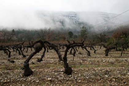 vines winter mist